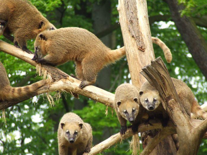 Tierpark Cottbus