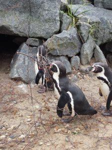 Pinguine im Spreewelten Bad Lübbenau