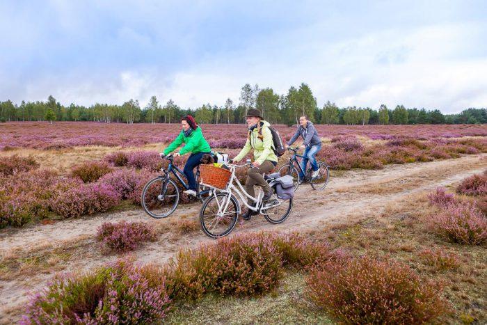 Fahrradtour durch die Heidelandschaft | Foto:  Elbe-Elster-Land