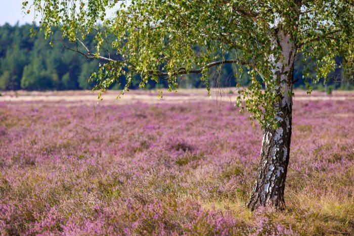 Heidelandschaft  | Foto: