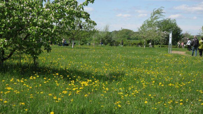 Pomologischer Schau- und Lehrgarten Döllingen im Frühjahr | Foto: